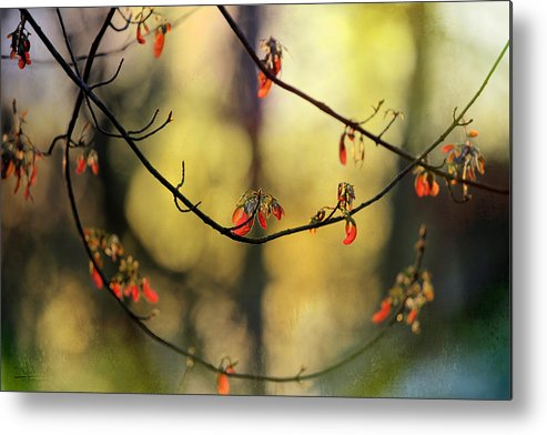 Metal Print featuring the photograph Spring Abstract by Theresa Campbell