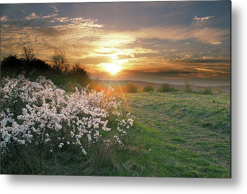 Nature Metal Print featuring the photograph Spring Flowers. by Alex Lim