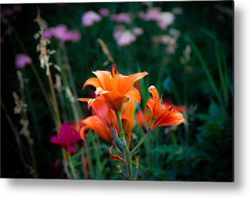 Orange Flowers Metal Print featuring the photograph Spring Flowers by Sherri Barrett