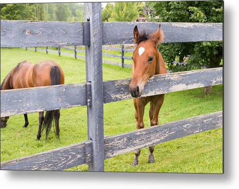 Foal Metal Print featuring the photograph Spring Foal by Steven R Breininger