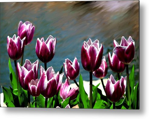 Tulip Metal Print featuring the photograph Spring Tulips 1 by Jim Darnall