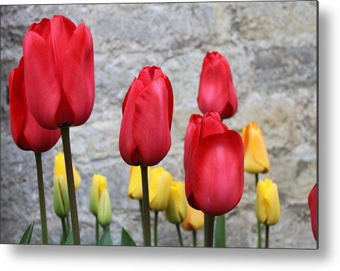 Tulips Metal Print featuring the photograph Spring Tulips by Lauri Novak