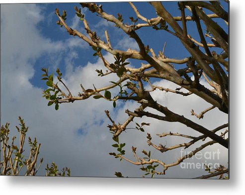 Spring Metal Print featuring the photograph Springing Forth by Carol Bradley
