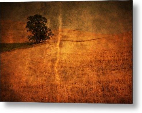 Agriculture Metal Print featuring the photograph Standing Alone by Eggers Photography