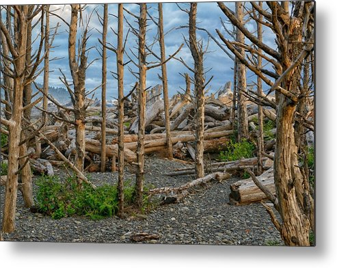 Beach Metal Print featuring the photograph Standing Driftwood by Philip Kuntz