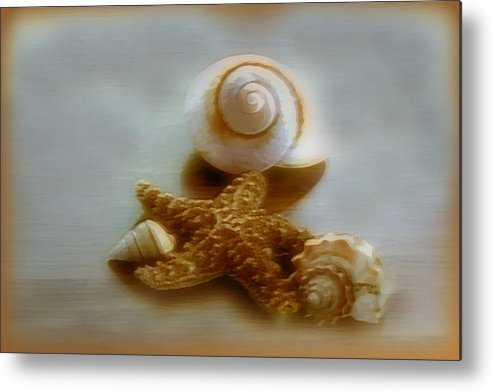 Beach Art Metal Print featuring the photograph Star And Shells by Linda Sannuti