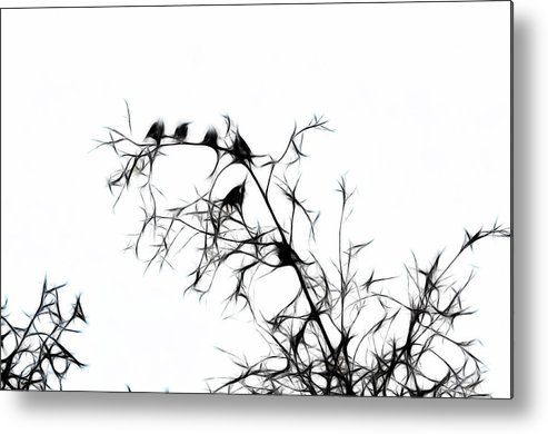 Bird Metal Print featuring the photograph Starlings by Lawrence Christopher