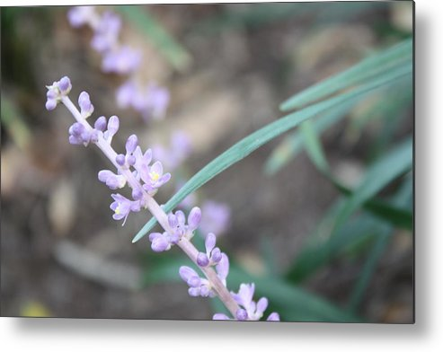 Flower Metal Print featuring the photograph Study In Purple Monkey Grass Bloom by Paula Coley