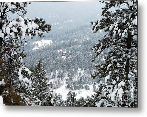 Evergreen Metal Print featuring the photograph Evergreen by Kimberly Noxon