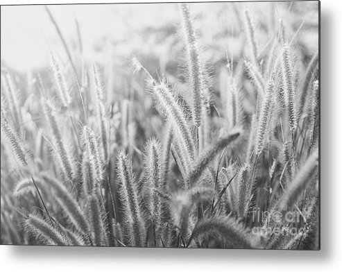 Summer Metal Print featuring the photograph Summer Field by Marcus Lindstrom