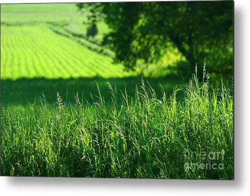 Agricultural Metal Print featuring the digital art Summer Fields Of Green by Sandra Cunningham