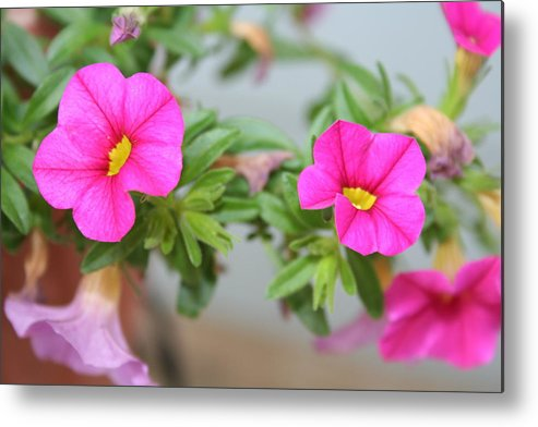 Flowers Metal Print featuring the photograph Summer Flowers by Linda Sannuti