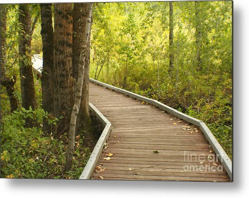 Trail Metal Print featuring the photograph Summer Walk by Idaho Scenic Images Linda Lantzy