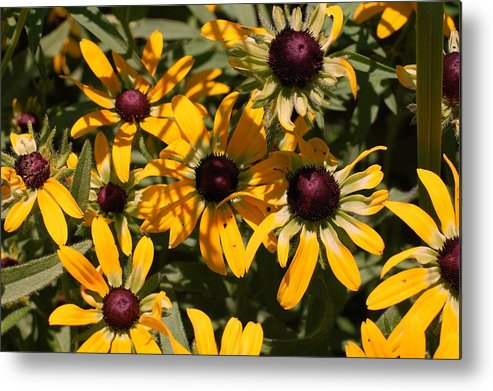 Flower Metal Print featuring the photograph Sun And Shade by Jame Hayes