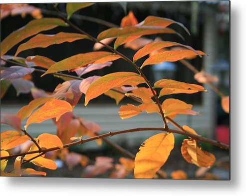 Fall Metal Print featuring the photograph Sun Shing Through by Linda Ebarb