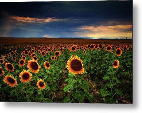 Colorado Metal Print featuring the photograph Sunflower Storms by John De Bord