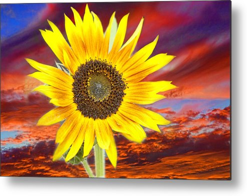 Sunflowers Metal Print featuring the photograph Sunflower Sunset by James BO Insogna