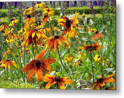 Sunflowers Metal Print featuring the photograph Sunflowers And Friends by Jean Booth