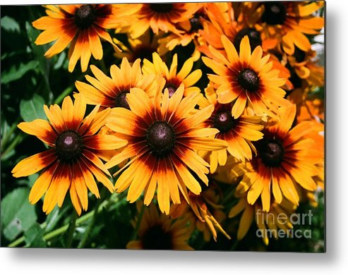 Sunflowers Metal Print featuring the photograph Sunflowers by Dean Triolo