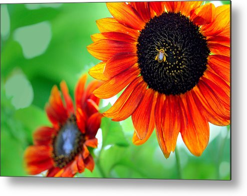 Sunflowers  Metal Print featuring the photograph Sunflowers by Mark Ashkenazi