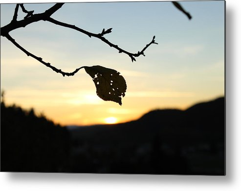 Sunset Metal Print featuring the photograph Sunset by Alena Madosova