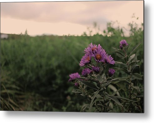 Sunset Metal Print featuring the photograph Sunset Purple by James Thomas
