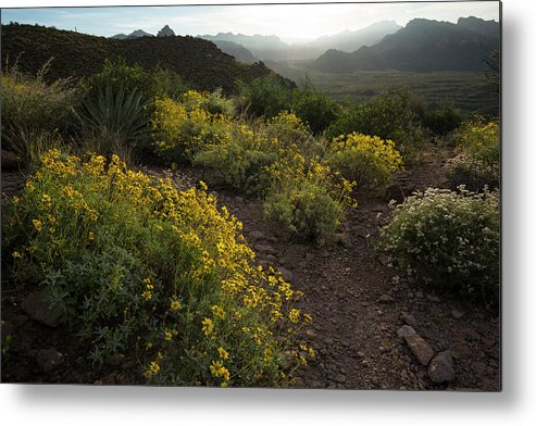 Spring Metal Print featuring the photograph Superstition Spring by Sue Cullumber