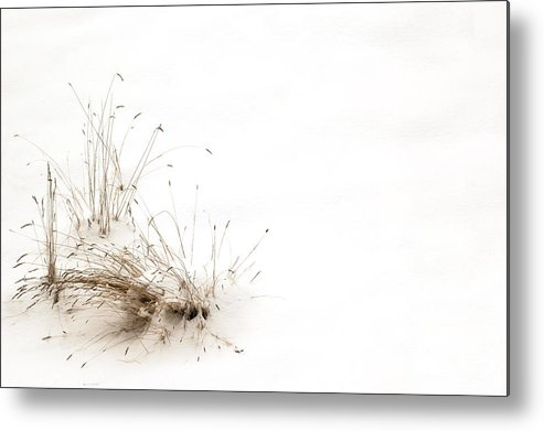 Reeds Metal Print featuring the photograph Survival by Peter Olsen