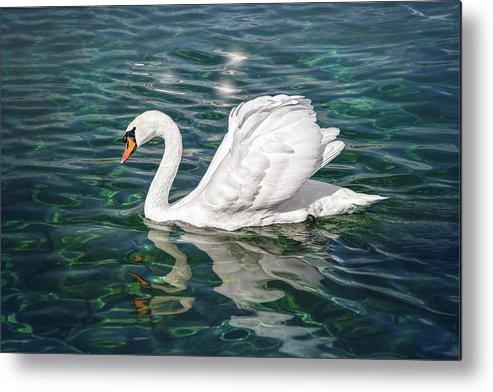 Swan Metal Print featuring the photograph Swan On Lake Geneva Switzerland by Carol Japp
