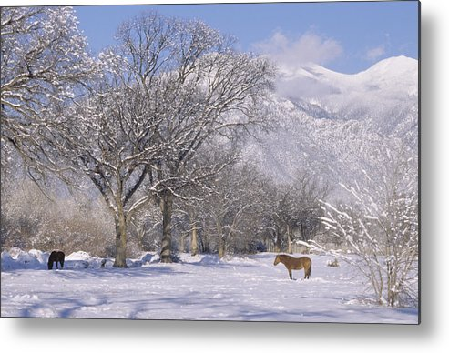Landscape Metal Print featuring the print Taos January 2008 by Lynard Stroud