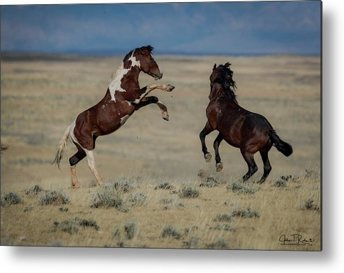 Wild Metal Print featuring the photograph Tempers Flaring by Clicking With Nature