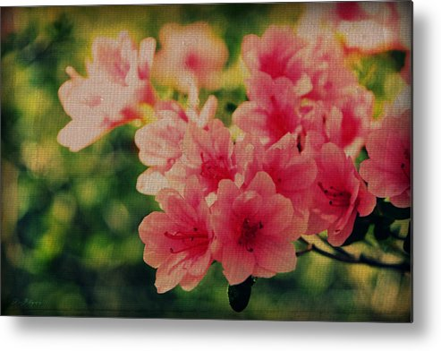 Flowers Metal Print featuring the photograph Texture by Kim Monroe