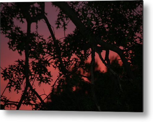 Morning Metal Print featuring the photograph Thank God For Life by Paul SEQUENCE Ferguson       sequence dot net