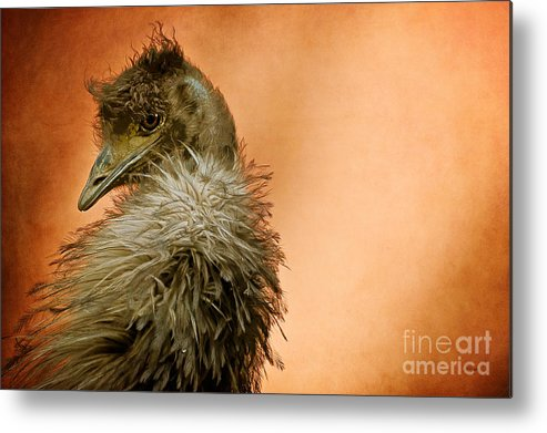 Emu Metal Print featuring the photograph That Shy Come-hither Stare by Lois Bryan