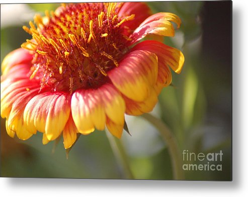 Flower Metal Print featuring the photograph The Beauty by Donna Bentley