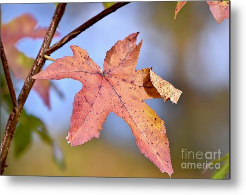 Autumn Metal Print featuring the photograph The Beauty Of Fall by Jeramey Lende