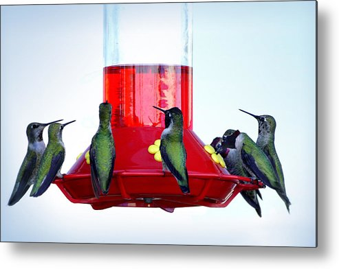 Hummingbirds Metal Print featuring the photograph The Breakfast Club by Lynn Andrews