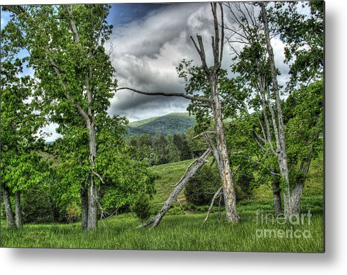 Virginia Metal Print featuring the photograph The Buzzard Trees by Pete Hellmann