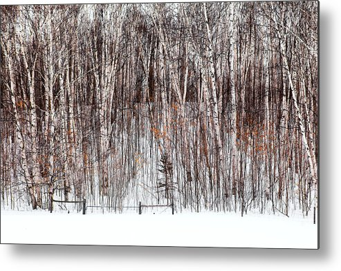 Trees Metal Print featuring the photograph The Fence by Linda McRae