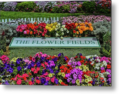 Flowers Metal Print featuring the photograph The Flower Field by Tommy Anderson