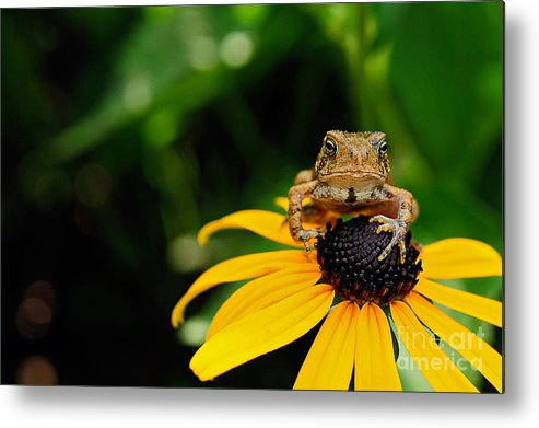 Toad Metal Print featuring the photograph The Harbinger by Lois Bryan