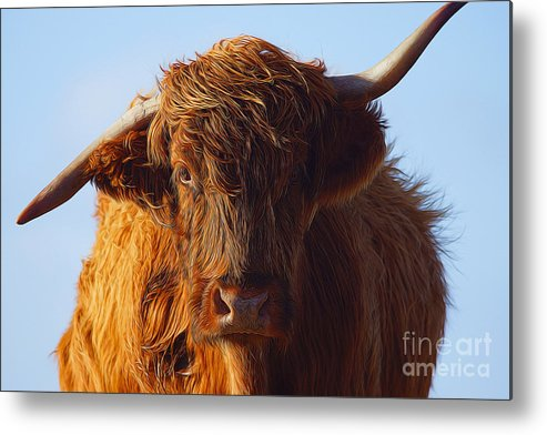 Highland Cow Metal Print featuring the photograph The Highland Cow by Smart Aviation
