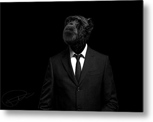 Chimpanzee Metal Print featuring the photograph The Interview by Paul Neville