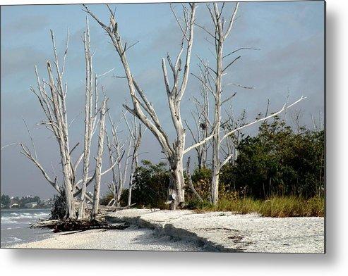 Beaches Metal Print featuring the photograph The Natural Beach by Rosalie Scanlon