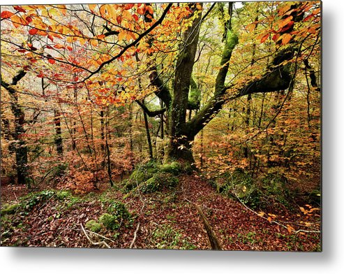 Jorgemaiaphotographer Metal Print featuring the photograph The Protector by Jorge Maia