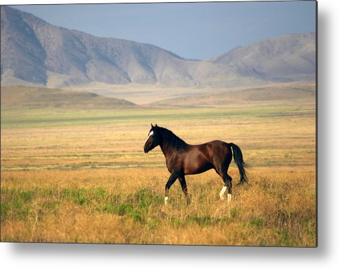 Wild Metal Print featuring the photograph The Proud One by Gene Praag