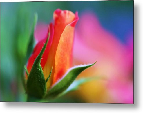 Rose Metal Print featuring the photograph The Rose by Mitch Cat