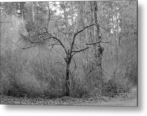 Black Metal Print featuring the photograph The Scary Little Tree by J D Banks