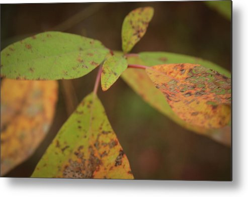 Autumn Metal Print featuring the photograph The Soft Intensity Of Fall 6210 H_2 by Steven Ward