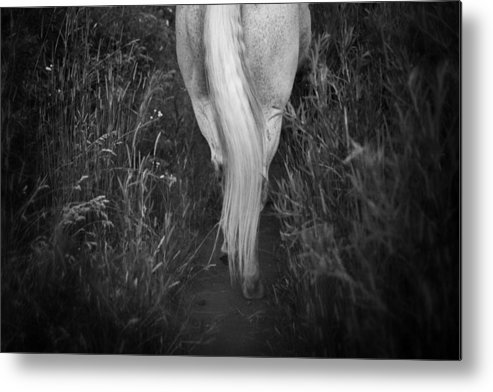 Equine Metal Print featuring the photograph The Tale End by Nick Sokoloff